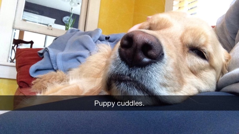 And my January ended with the most precious puppy cuddles.