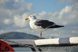 Feeling artsy with this seagull.