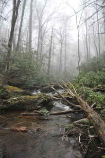 The fog rolling in over the creek. (Pretty eerie).