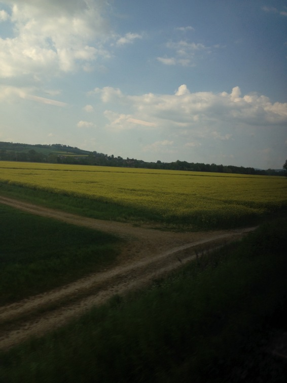 Fields of canola from the train.