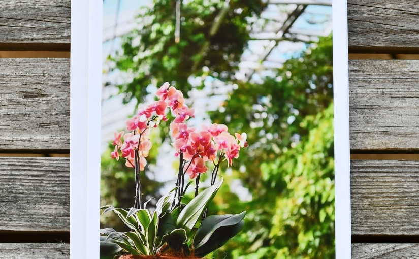 Greenhouse Orchids Greeting Card